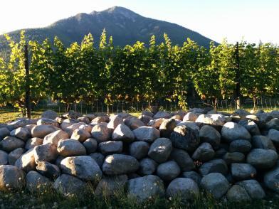 vineyard helper 065